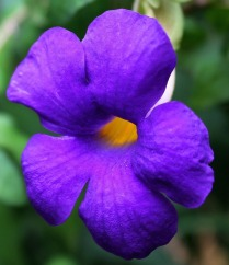 flower-210986_1920